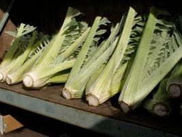 Fresh Cardoon