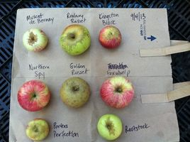 cider apple varieties